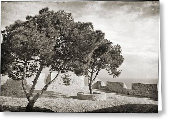 Beach In Santa Barbara Greeting Cards - Spanish trees in the wind Greeting Card by Ingvild Carmen
