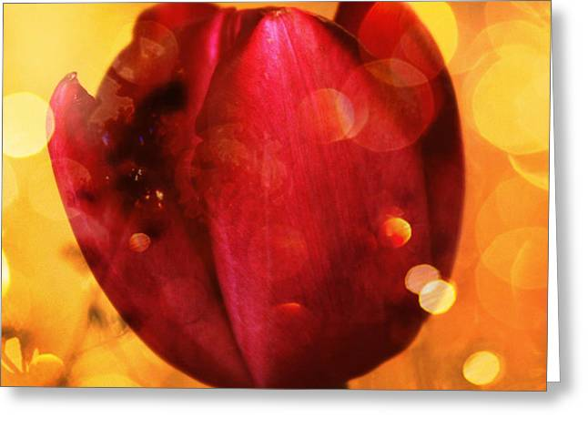 Sparkle of the Tulip Greeting Card by Cathie Tyler