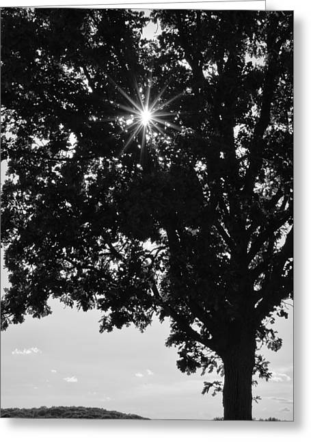 Commonplace Greeting Cards - Sparkle Through the Treetops Greeting Card by Christi Kraft