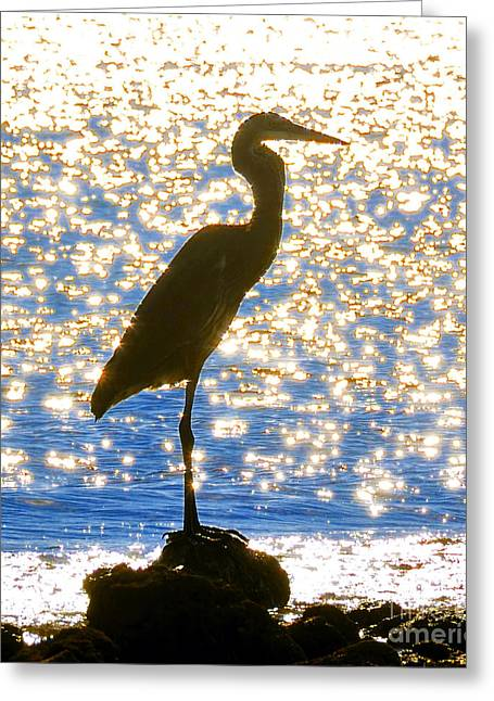 Sea Birds Greeting Cards - Sparkling Egret Greeting Card by David Lee Thompson