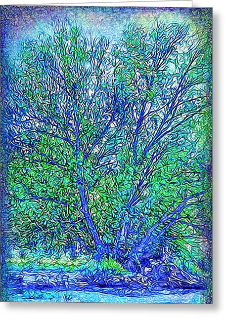 Stream Digital Greeting Cards - Sparkling Tree By The Lake - Boulder County Colorado Greeting Card by Joel Bruce Wallach