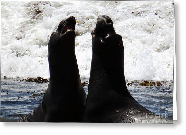 Elephant Seals Digital Greeting Cards - Sparring Match Greeting Card by Michael Lovell