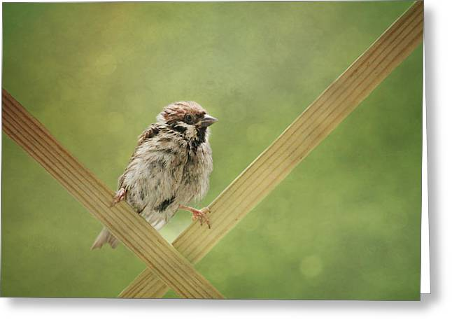Sparrow Greeting Cards - Sparrow children Greeting Card by Heike Hultsch