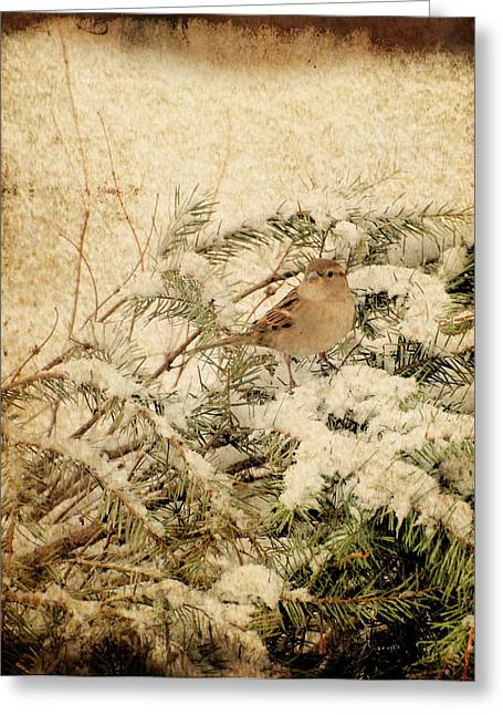 Sparrow Greeting Cards - Sparrow In Winter I - Textured Greeting Card by Angie Tirado