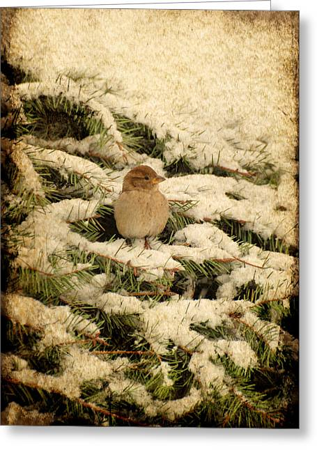 Sparrow Digital Art Greeting Cards - Sparrow In Winter II - Textured Greeting Card by Angie Tirado