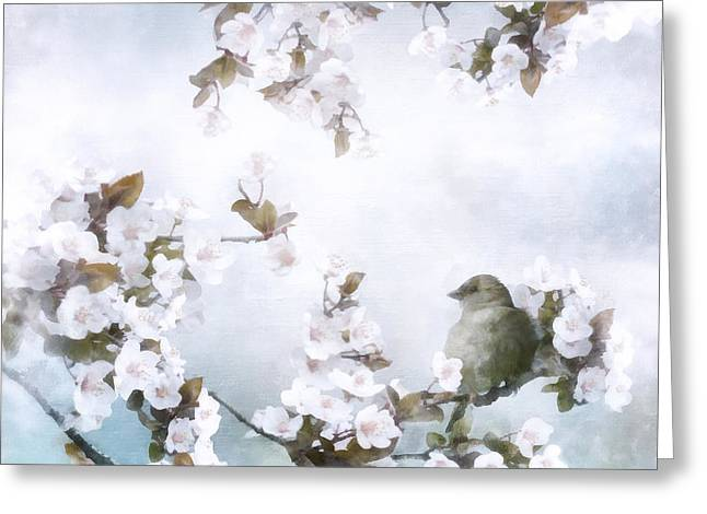 In A Tree Greeting Cards - Sparrow on Cherry Branch Greeting Card by Shanina Conway