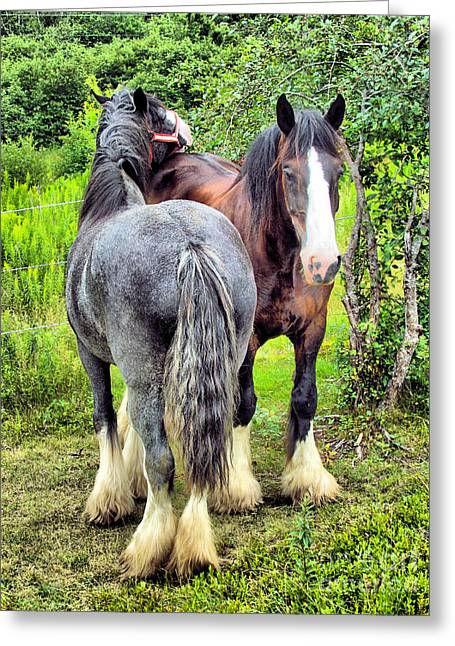 Maine Farms Greeting Cards - Special Friends Greeting Card by Elizabeth Dow