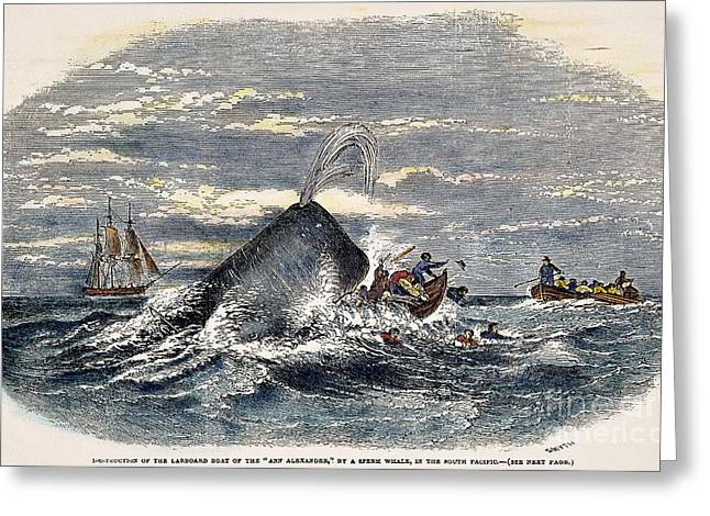 Sperm Whale Attack, 1851 Greeting Card by Granger