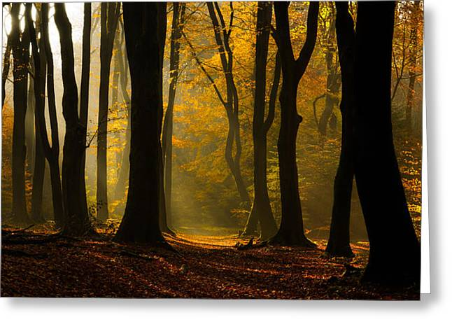 Yellow Trees Greeting Cards - Speulder Panorama Greeting Card by Martin Podt