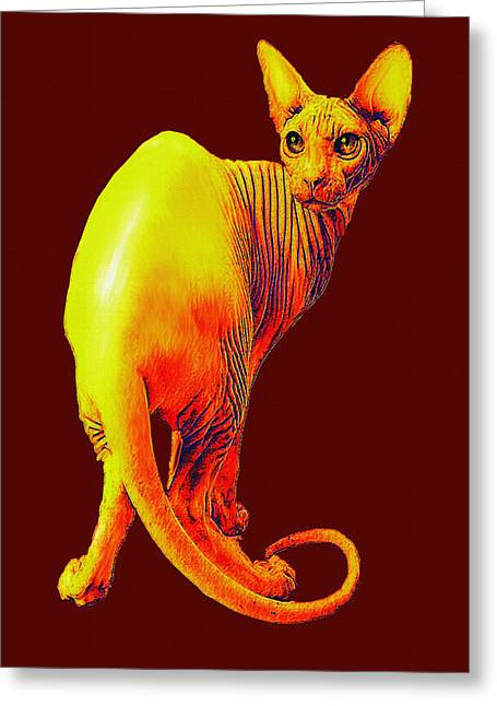 Sphynx Cat Greeting Cards - Sphynx Cat Greeting Card by Jane Schnetlage