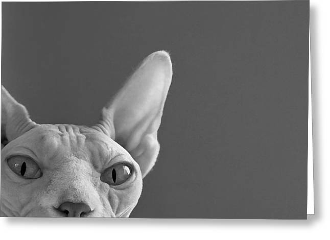 Sphynx Cat Portrait Greeting Cards - Sphynx in Black and White Greeting Card by Glennis Siverson
