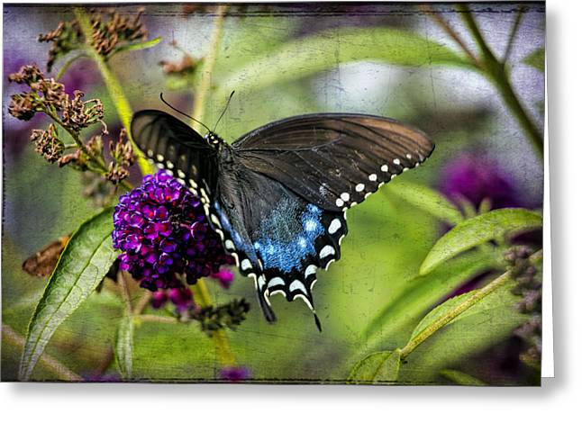 Kids Wall Art Greeting Cards - Eastern Black Swallowtail Butterfly Greeting Card by Geraldine Scull