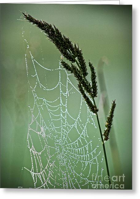 Abstract Rain Greeting Cards - Spider Web Art by Nature Greeting Card by Ella Kaye Dickey
