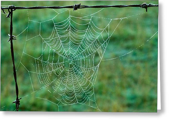 Spider Web In The Springtime Greeting Card by Douglas Barnett