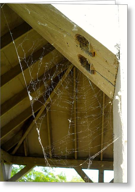 Hilliard Greeting Cards - Spider Web Greeting Card by Theresa Adams