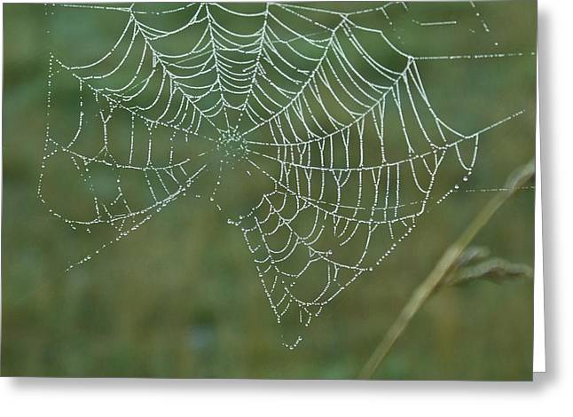 Satisfaction Greeting Cards - Spider Web with Dew Drops Greeting Card by Douglas Barnett