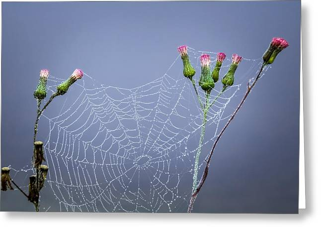 Print On Canvas Greeting Cards - Spider web Greeting Card by Zina Stromberg