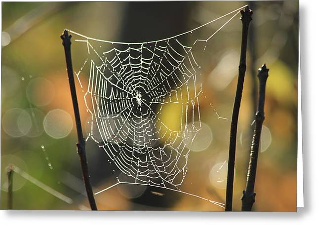Spider's Creation Greeting Card by Karol Livote