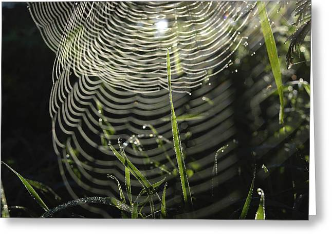 Arachnids Greeting Cards - Spiders web. Greeting Card by Bernard Jaubert