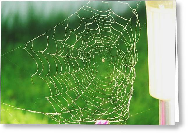 Print Photographs Greeting Cards - Spiders Web  Greeting Card by Sharon Duguay