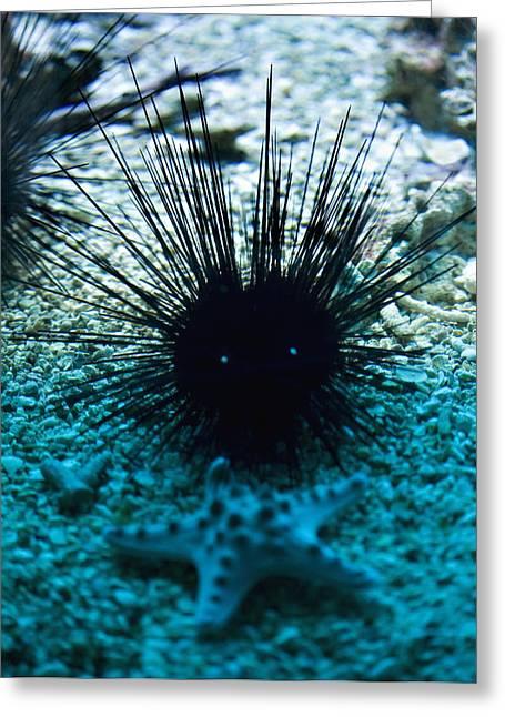 Aquarium Fish Greeting Cards - Spike Greeting Card by Marilyn Hunt