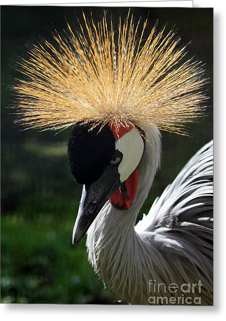 Spiked Crane Greeting Card by Jennifer Robin