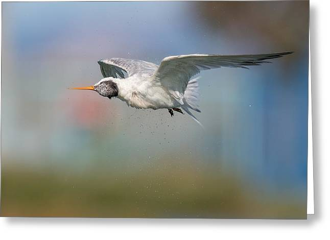 Tern Greeting Cards - Spin Cycle Greeting Card by Phoo Chan