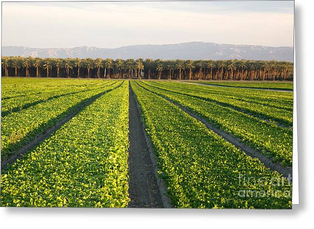 California Agriculture Greeting Cards - Spinach And Date Palms Greeting Card by Inga Spence