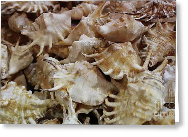 Spiny Sea Shells Greeting Card by Paulette Thomas