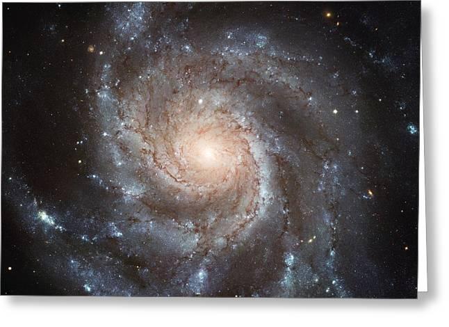 Spiral Galaxy - Messier 77 Greeting Card by Marianna Mills