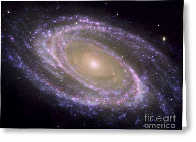 Constellations Greeting Cards - Spiral Galaxy Messier 81 Greeting Card by Stocktrek Images