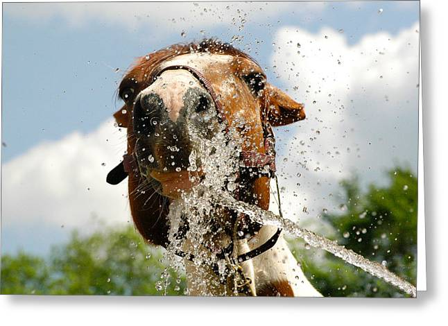 Splash In The Face Greeting Card by Joy Alfandre