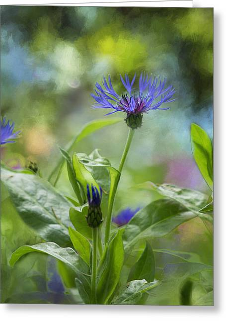 Centaurea Montana Greeting Cards - Splendor in the Garden Greeting Card by Belinda Greb