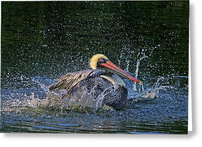 Splish Splash Greeting Cards - Splish Splash Greeting Card by HH Photography of Florida
