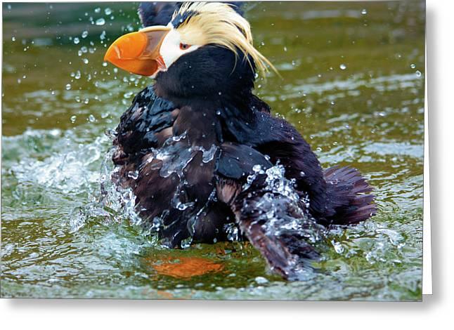 Splish Splash Greeting Card by Mike Dawson