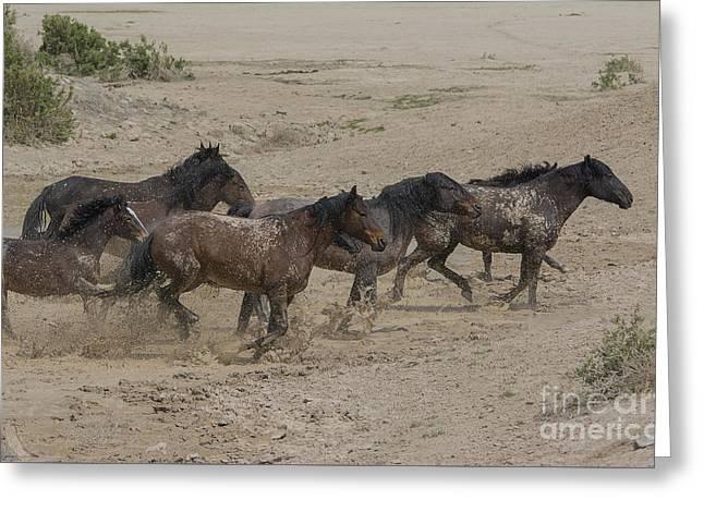 Wild Horse Pyrography Greeting Cards - Splish Splash  Greeting Card by Nicole Markmann Nelson