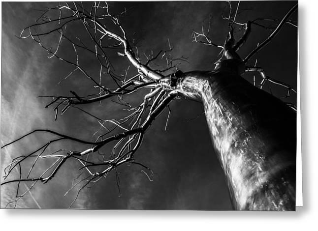 Split Black And White Greeting Card by Pelo Blanco Photo