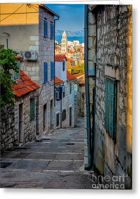 Dalmatian Greeting Cards - Split from Marjan Hill Greeting Card by Inge Johnsson