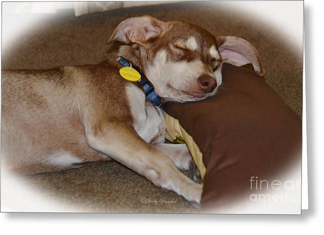 Puppies Photographs Greeting Cards - Spoiled Greeting Card by Debby Pueschel