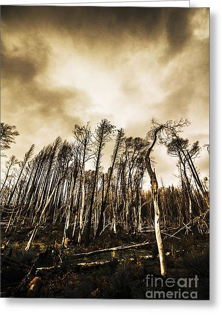 Spooky Dark Woods Greeting Card by Jorgo Photography - Wall Art Gallery