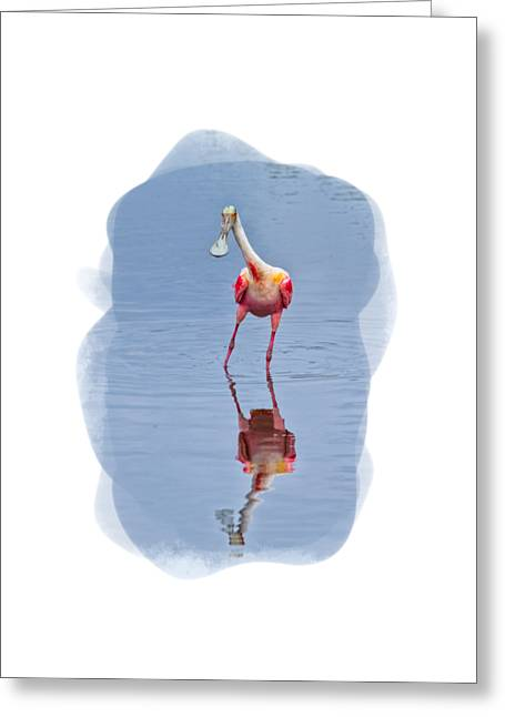Short Sleeves Greeting Cards - Spoonbill 1 Greeting Card by John Bailey