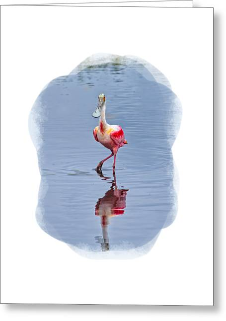 Apparel Greeting Cards - Spoonbill 2 Greeting Card by John Bailey