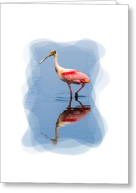 Short Sleeves Greeting Cards - Spoonbill 3 Greeting Card by John Bailey