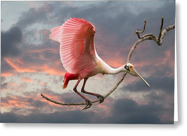 Sunset Greeting Cards Greeting Cards - Spoonbill Fantasy #1 Greeting Card by Linda Murdock