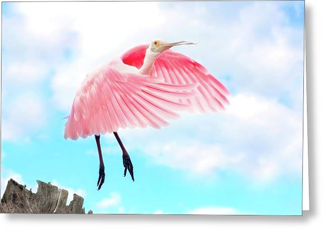 Spoonbill Launch Greeting Card by Mark Andrew Thomas