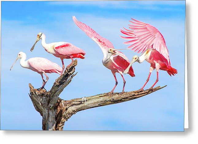 Spoonbill Party Greeting Card by Mark Andrew Thomas