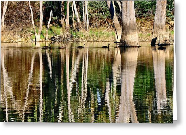 Reflections In River Greeting Cards - Spot the Swan Family Greeting Card by Kaye Menner