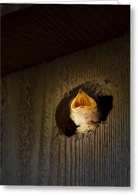 Baby Crying Greeting Cards - Spotlight on Baby Swallow Greeting Card by Jean Noren