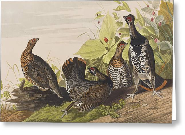 Spotted Greeting Cards - Spotted Grouse Greeting Card by John James Audubon