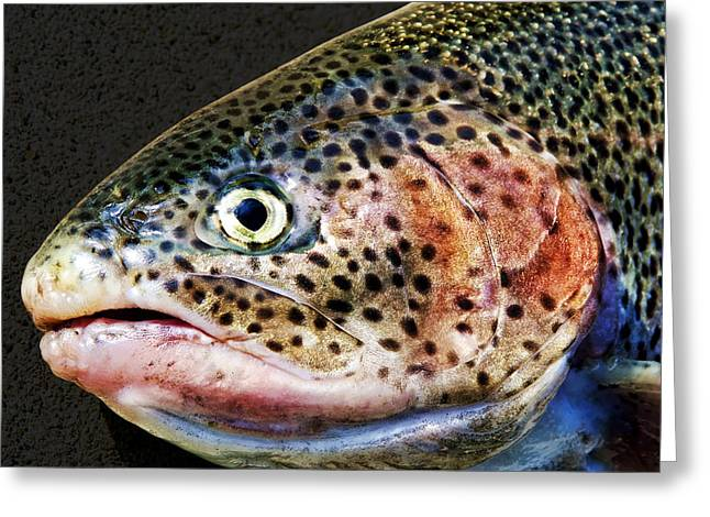 Rainbow Trout Greeting Cards - Spotted Greeting Card by Kelley King